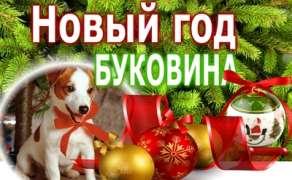 Новый год в Черновцах